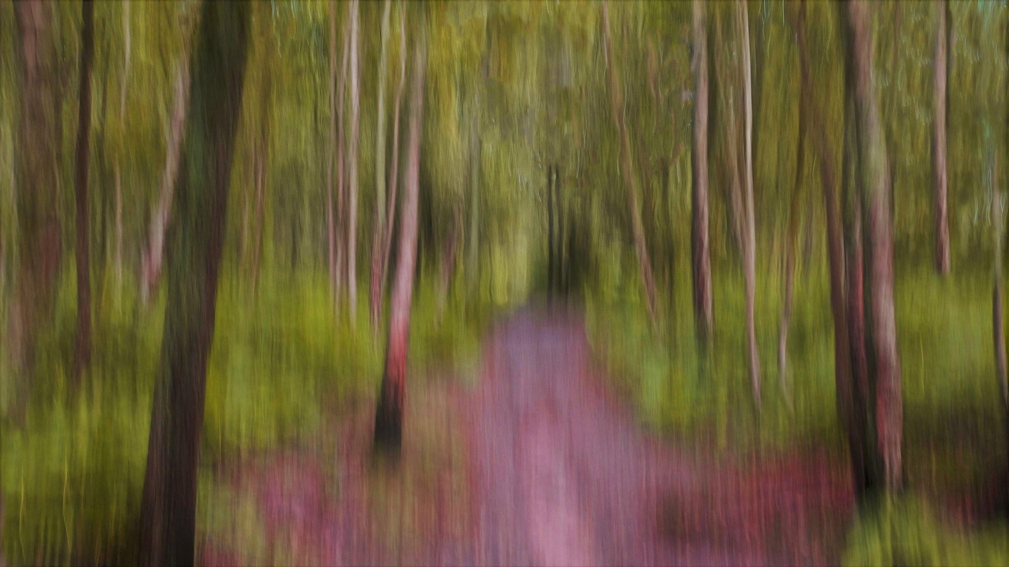 Dreamy Woodland