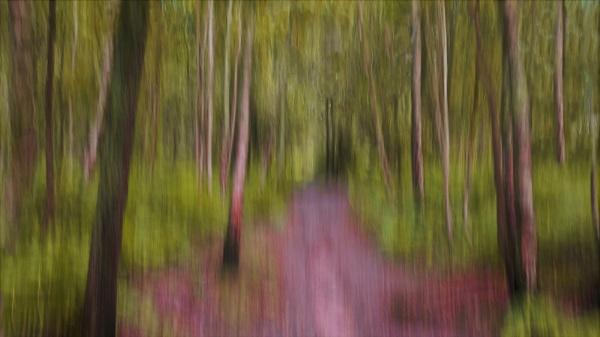 Dreamy Woodland by RosieLee