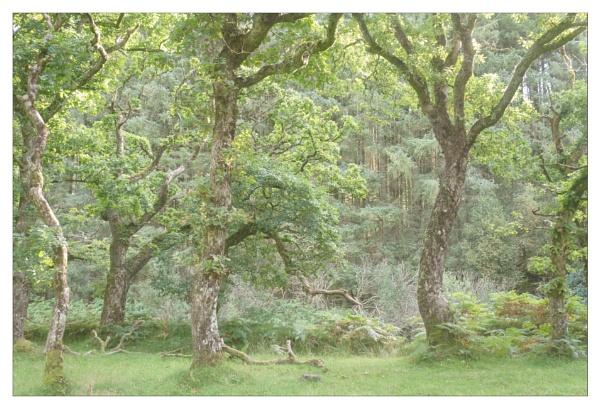 Lorna Doone Valley by suemart