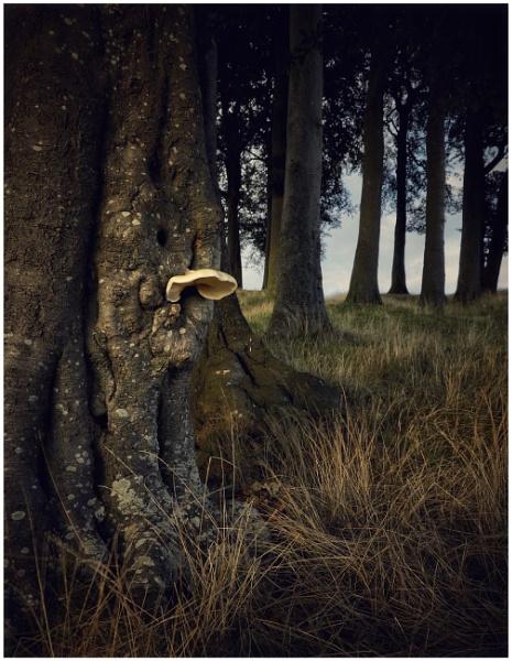 20 trees by Carlos9
