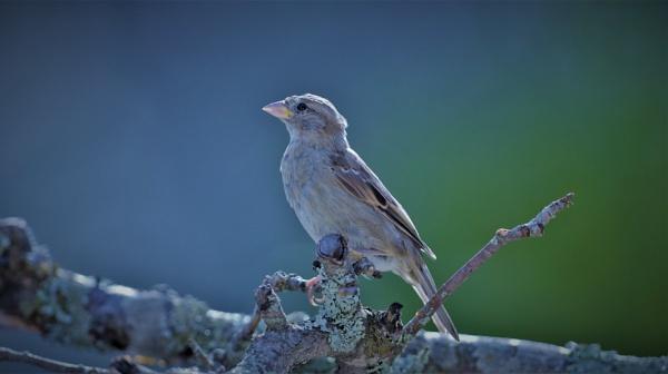 sparrow by MTT