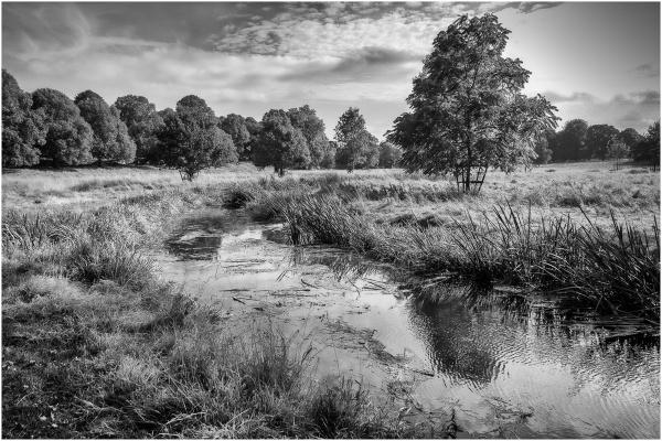 The River Dene by RolandC