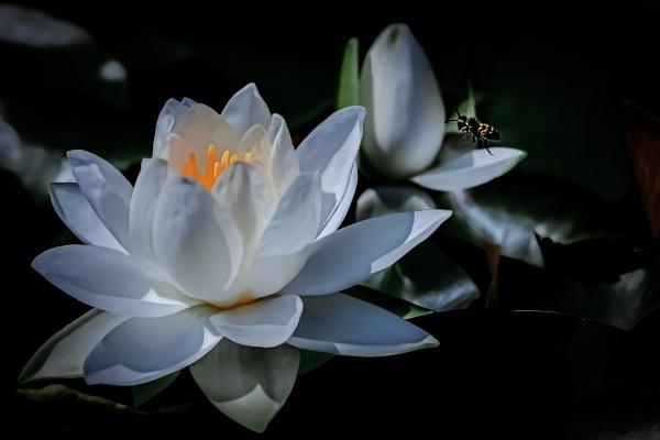 Living Zen by manicam
