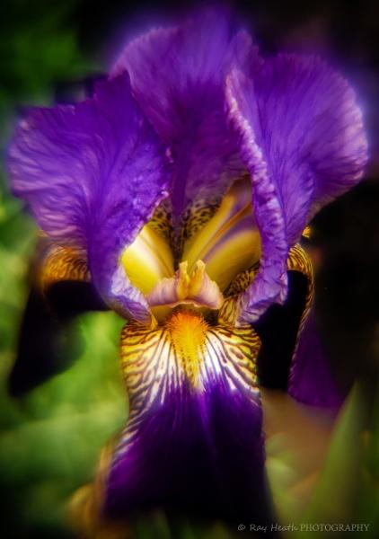 Mysterious purple iris inner realm by RayHeath