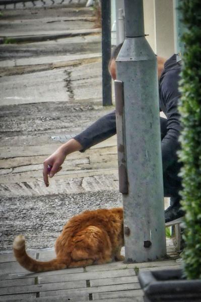 Btistolian cat by MIKEYMIKEY