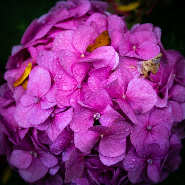 View to petals of blooming flower with water drops by rninov