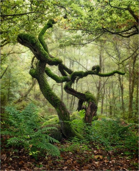 Dancing Trees by Leedslass1