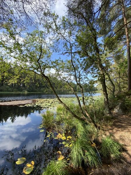 Dalbeattie Town Woodlands and Loch by topcatj