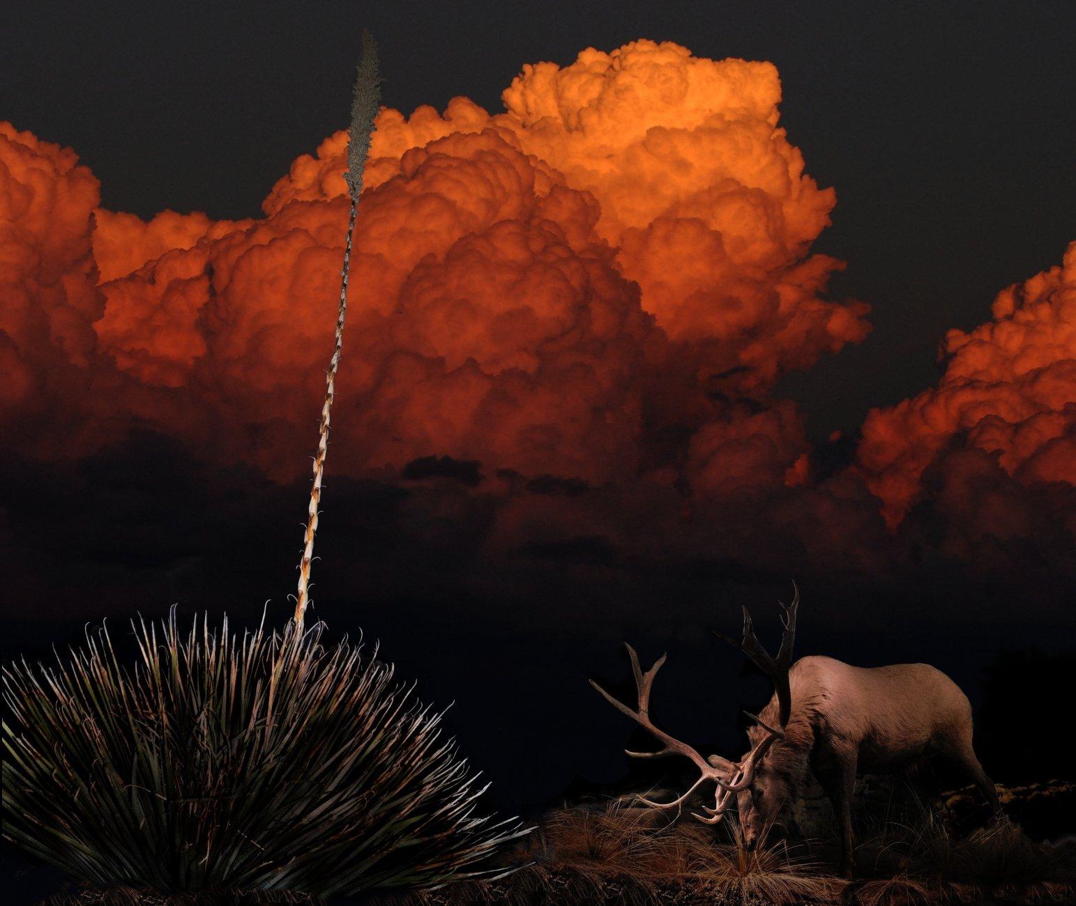 Arizona's Upper Basin
