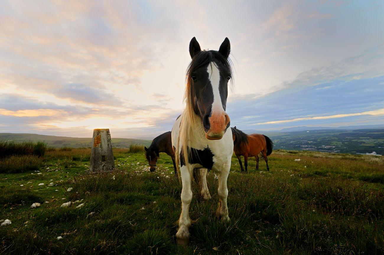 Nosey horse.
