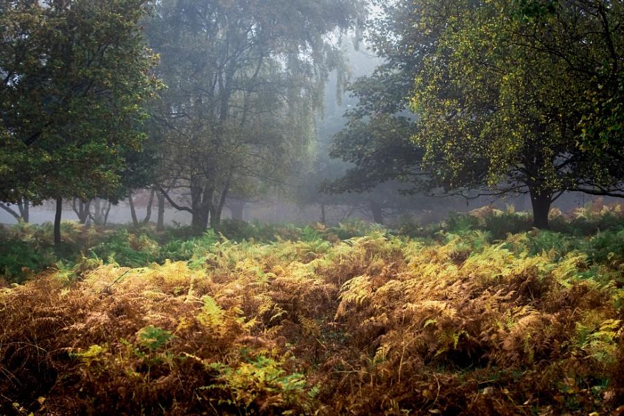 Exploring the Undergrowth