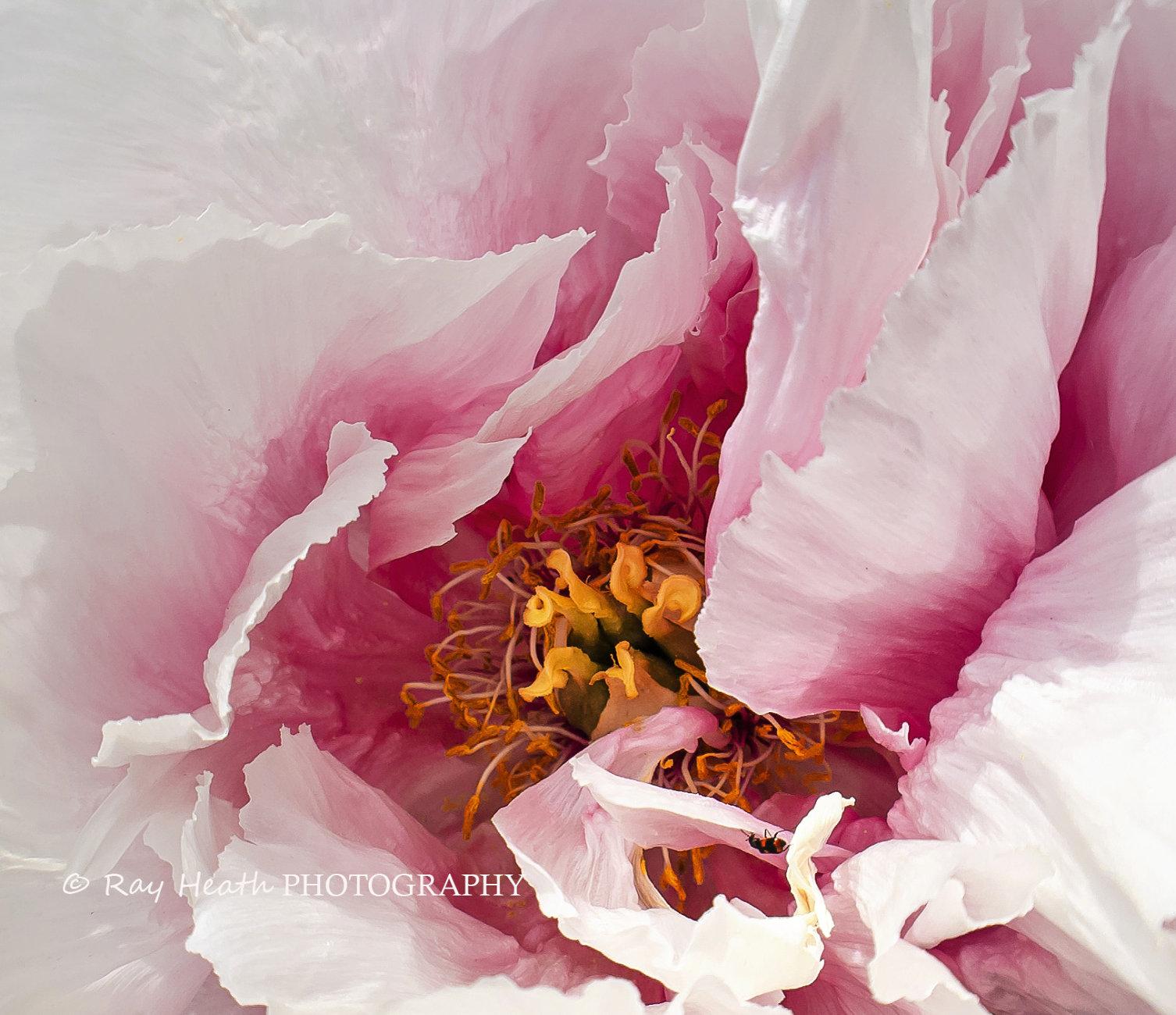 Bug in flower centre - digital art flower abstract