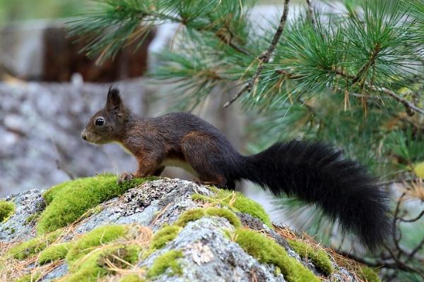 Squirrel by GPMASS