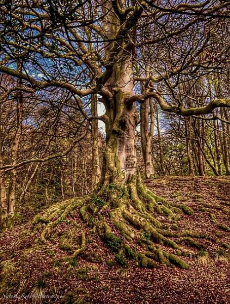 The Fairytale Tree - Coniston by Natz88895