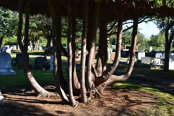 Merging trunks by Kaxxie