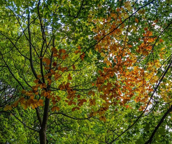 Seasons Changing by martin.w