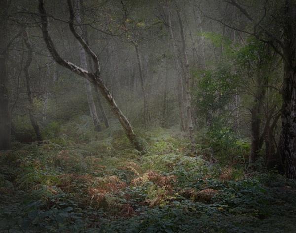 Catching the last rays of Autumn by Gavin_Duxbury