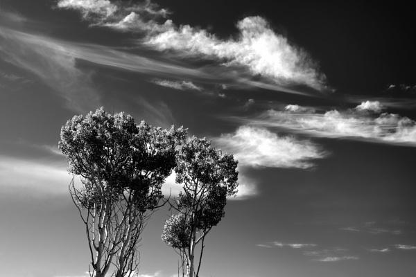 Ruby Mountain clouds by mlseawell