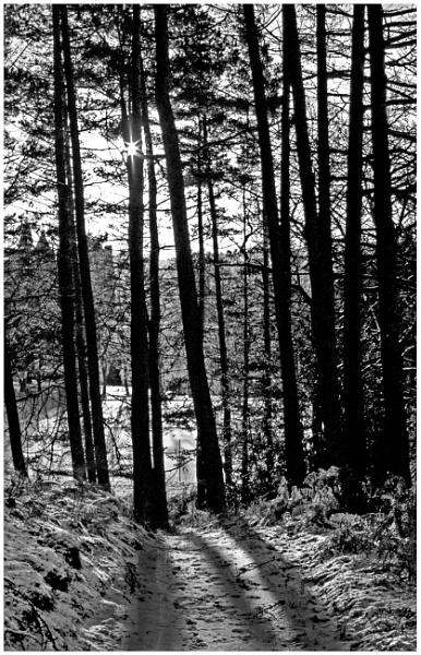Aldour Woods by mac