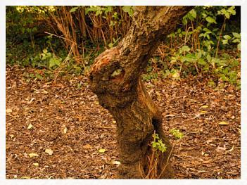 FUNNY TREE STUMP.