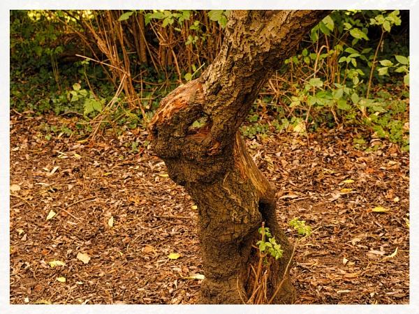 FUNNY TREE STUMP. by kojack