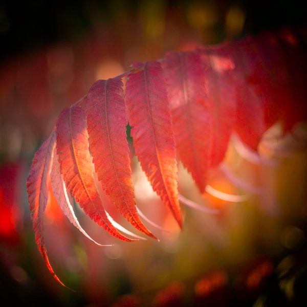 Backlit-Reds. by 2479