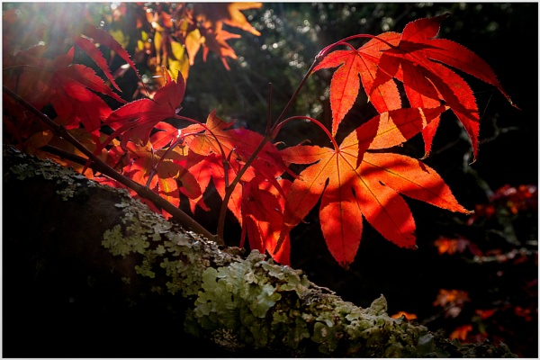 Autumn by capto