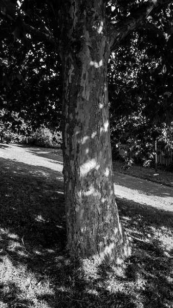 Tree Bark by woodini254