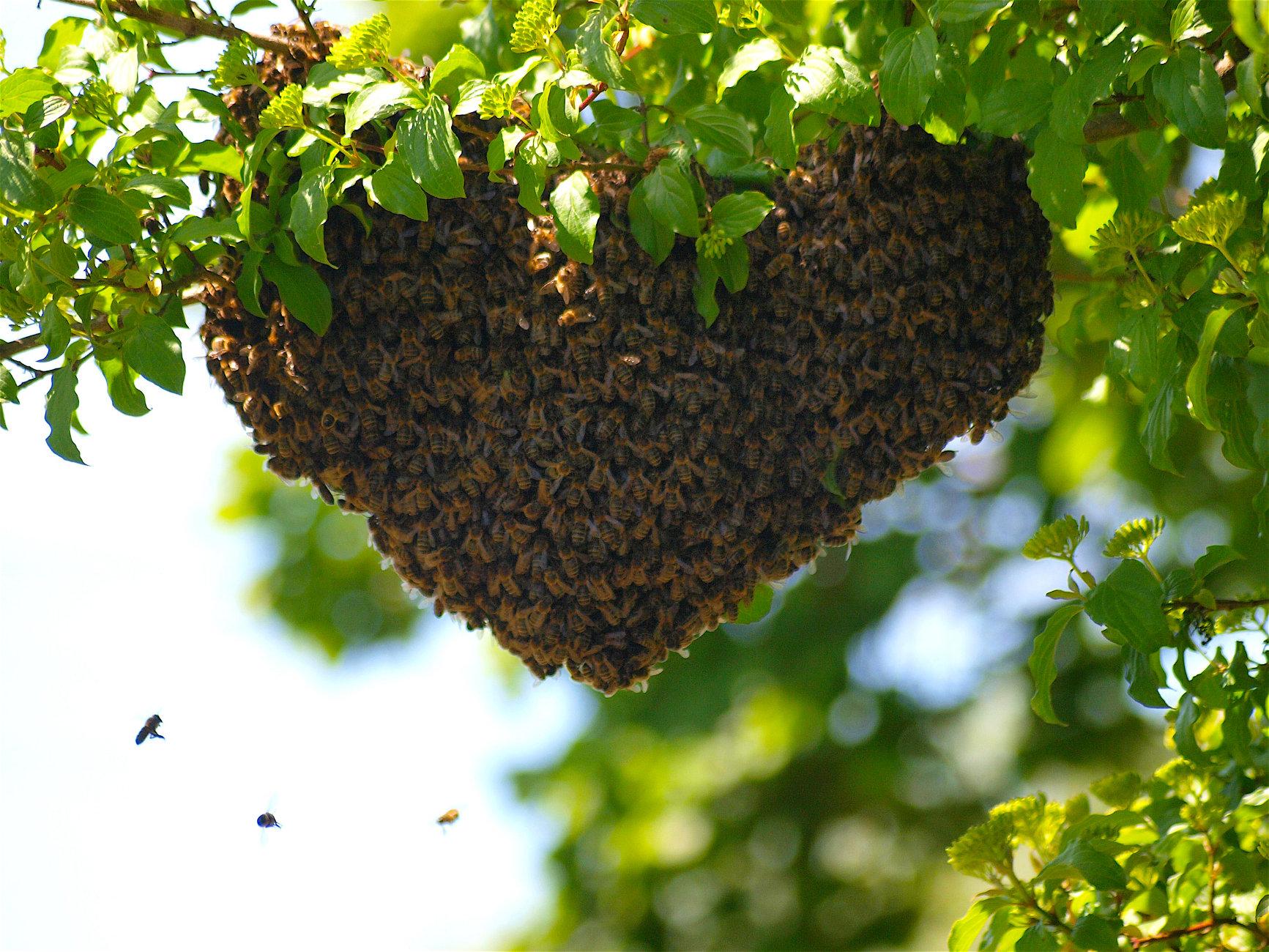 I Love Honey !