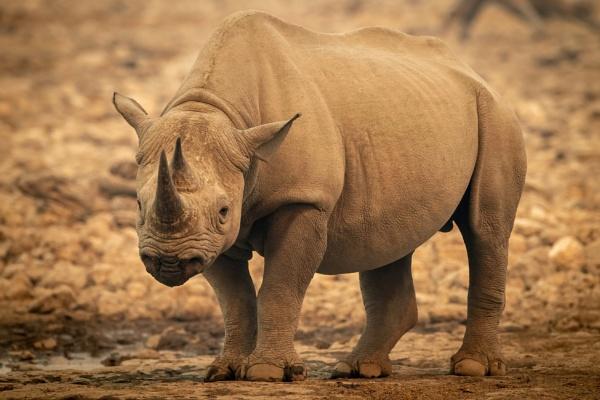 Spearmint Rhino by NickDale