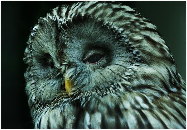 The Owl by sueriley
