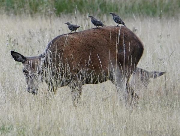 Deer perch by frogs123