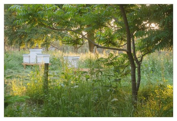 Summer evening by suemart