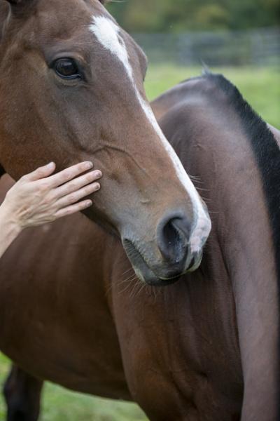 Polo pony by Ahem