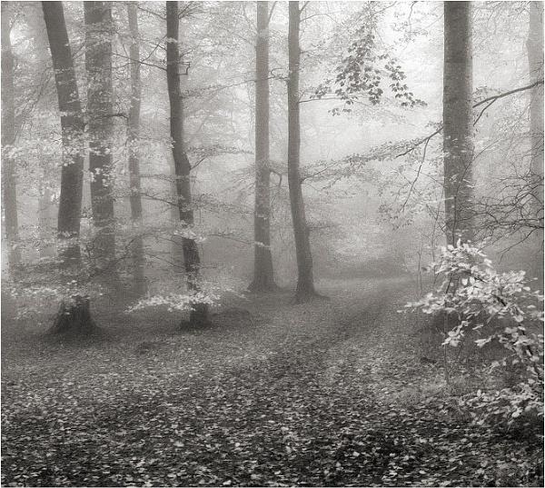 Soft Mist by MalcolmM