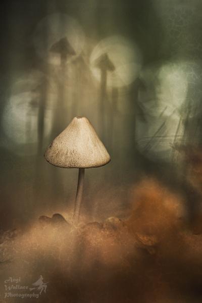 Dusky fairytale by Angi_Wallace