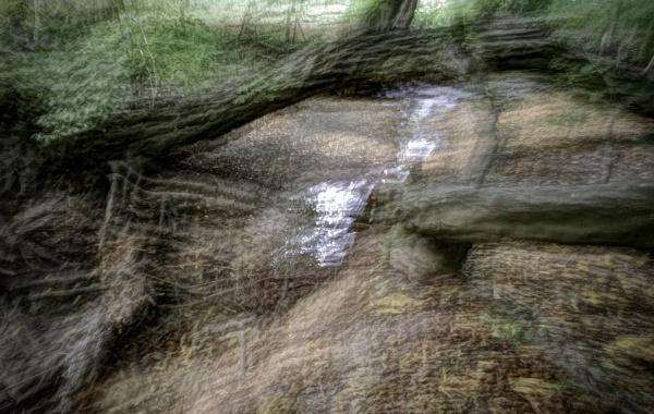 Woodland by nclark