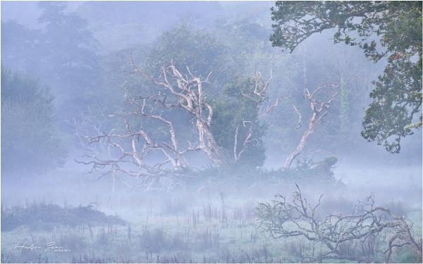 Dead Tree in the Mist by Hudson_Swan