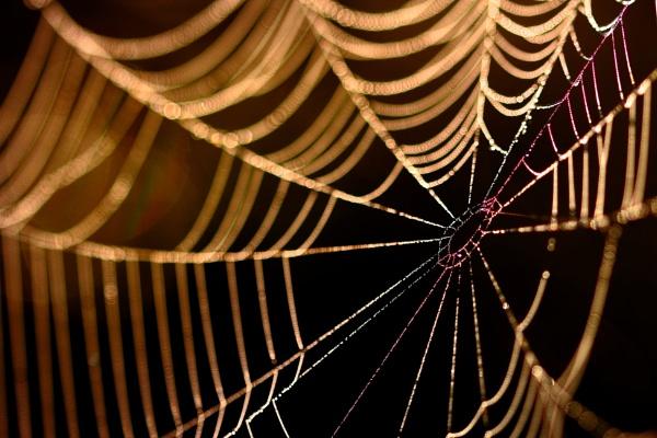 Backlit Web by Bigdenbo
