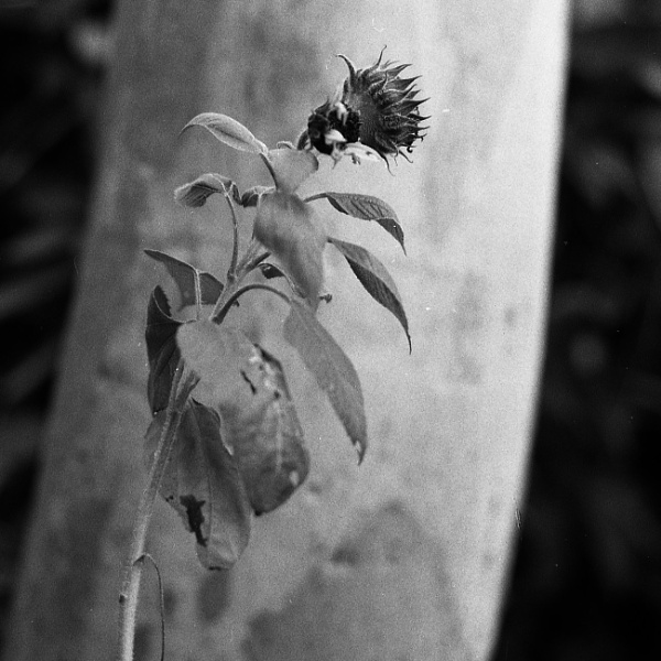 Flower and tree by dudler