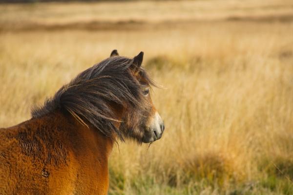 Wild, wild, wild, wild horses by dudler