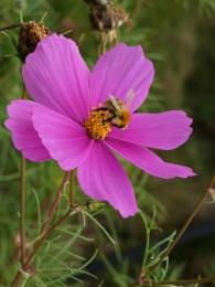 The Late Pollinator