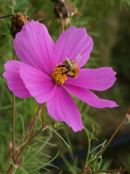 The Late Pollinator by ianmoorcroft