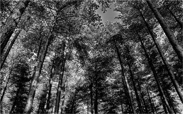 Tree Cathedral by judidicks