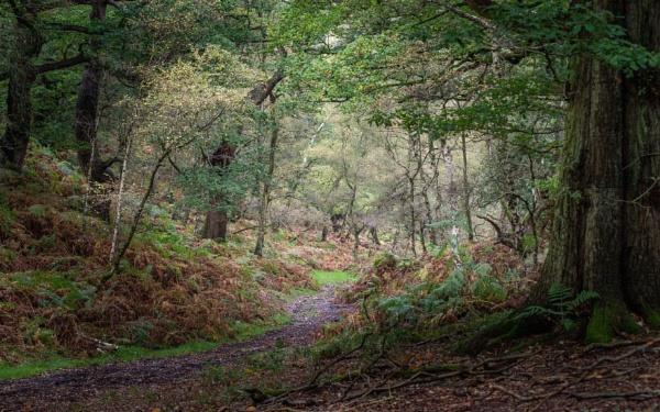 Autumn wood by soulsharer