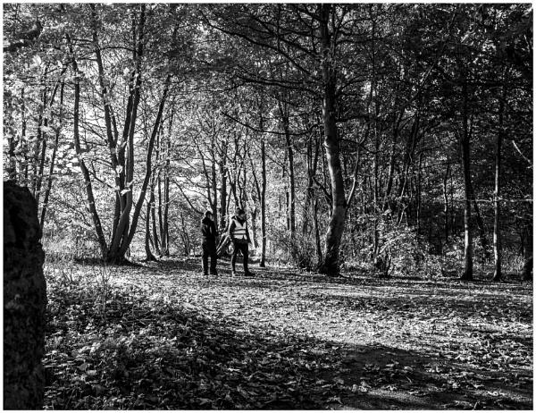 Yellowcraig Wood by mac