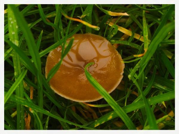 FUNGI IN THE GRASS. by kojack