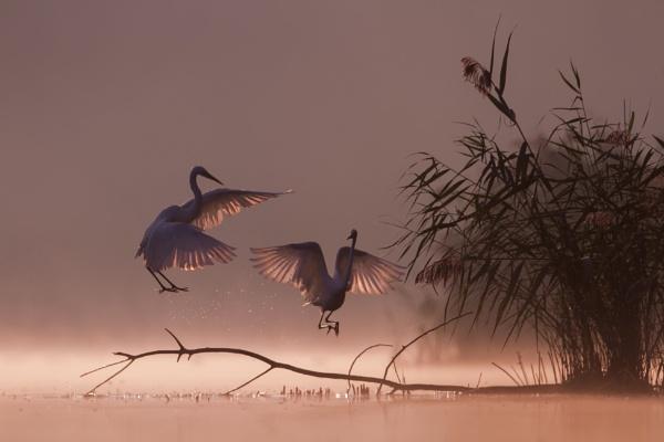 Morning Dance by zimen