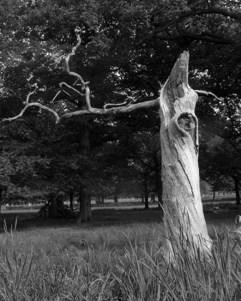 Wonder Tree. by tanglewoodplayer