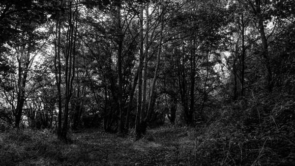 Woodland by woodini254